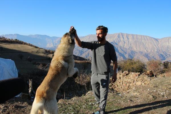 Ayı saldırısından hayatını kurtaran sadık dostları köpekleri için keçi kesti - Sayfa 1