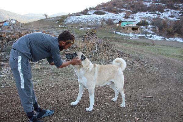 Ayı saldırısından hayatını kurtaran sadık dostları köpekleri için keçi kesti - Sayfa 4