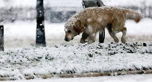 28 Ocak Meteoroloji'den son dakika uyarısı! Sağanak yağış ve kar... - Sayfa 4