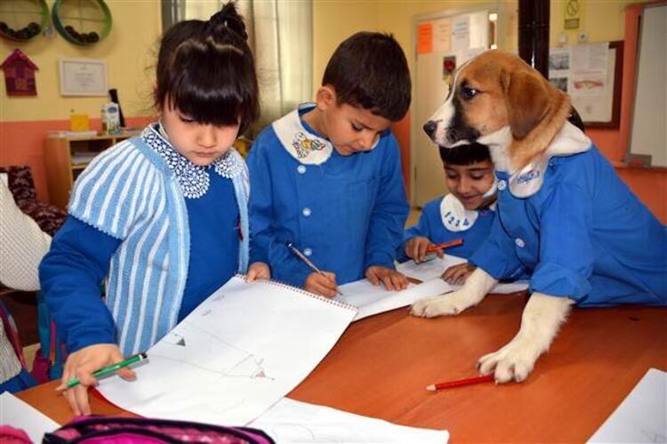 Mezarlıkta bulunan yavru köpek okulun maskotu oldu... Önlük giyip derslere katılıyor - Sayfa 2