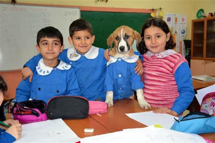 Mezarlıkta bulunan yavru köpek okulun maskotu oldu... Önlük giyip derslere katılıyor - Sayfa 3