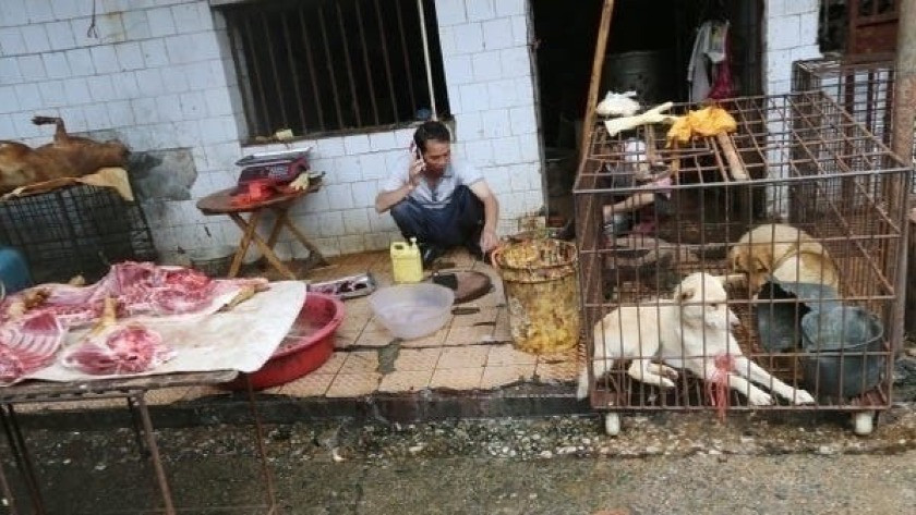 Çinliler yılda 4 milyon kedi yiyor