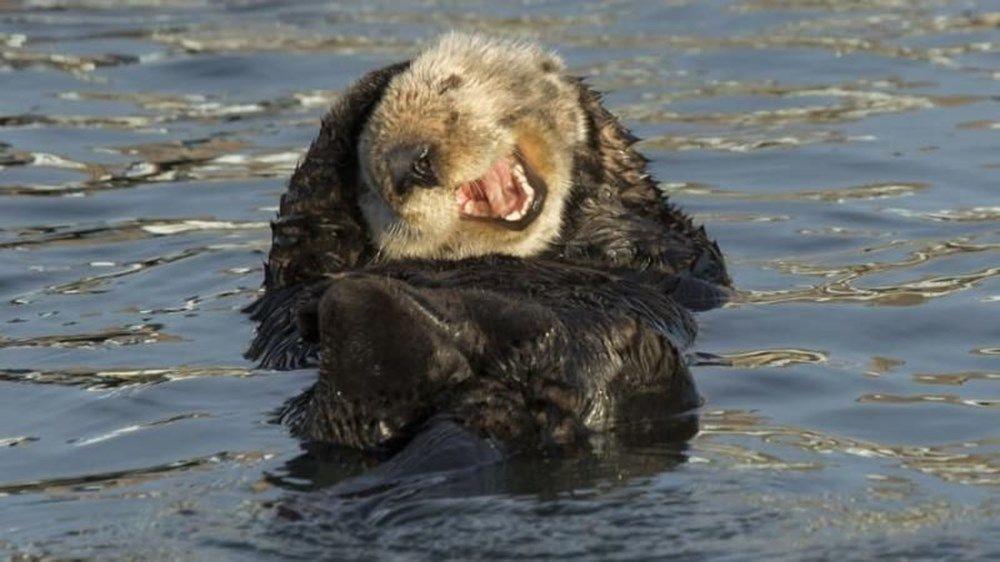 Vahşi yaşam komik fotoğrafları ödüllerinden seçilenler - Sayfa 4