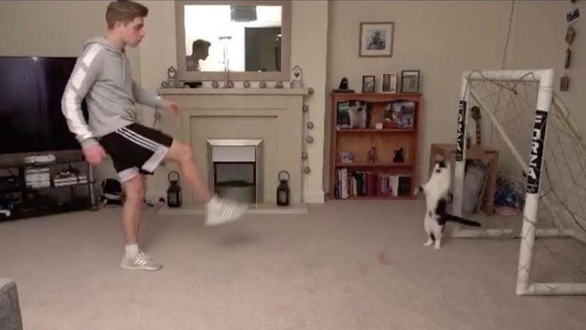 Kaleci kedi tıklanma rekorları kırdı