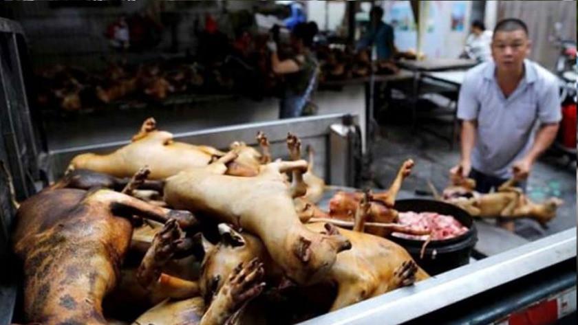 Köpek eti festivali başladı!