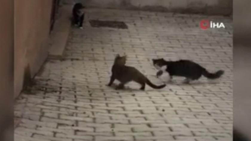 1 fare 5 kediye kafa tuttu - İZLE