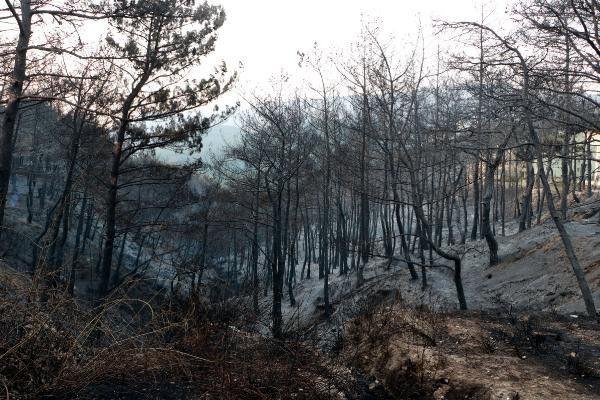 Hatay'daki yangının ardından kahreden görüntüler ortaya çıktı - Sayfa 4