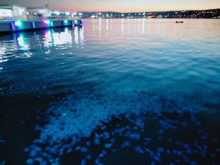 Marmara Denizi'nde büyük panik! Vatandaşlara 'Dokunmayın' uyarısı - Sayfa 4