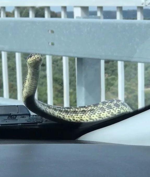 Seyir halindeki aracının camında yılan görünce şok oldu ! - Sayfa 2