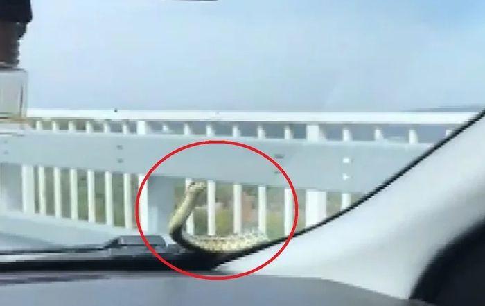 Seyir halindeki aracının camında yılan görünce şok oldu ! - Sayfa 1