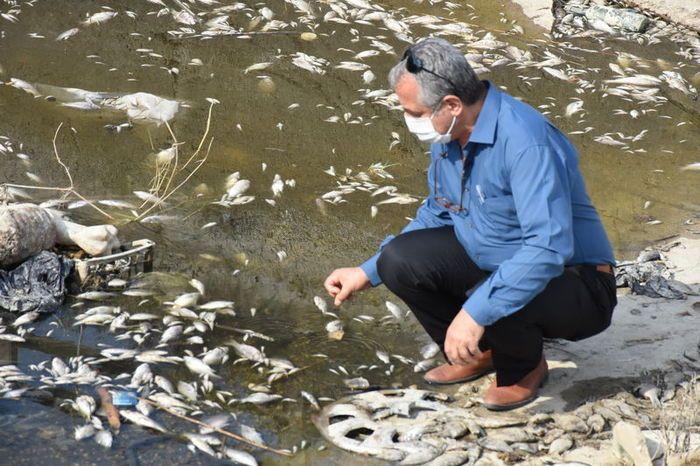 Aydın'daki toplu balık ölümüne inceleme başlatıldı! - Sayfa 4