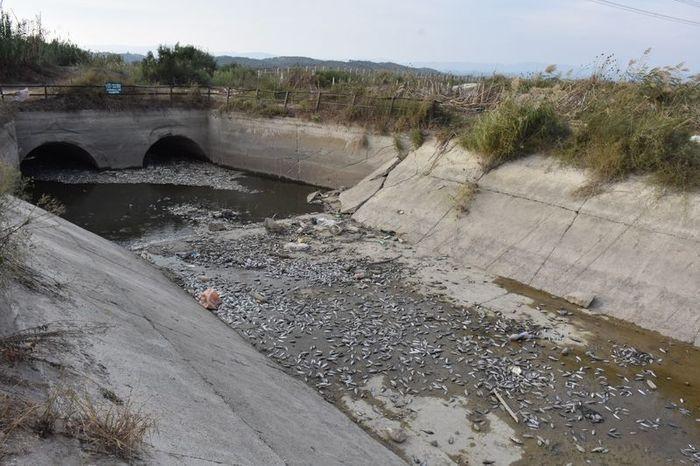 Aydın'daki toplu balık ölümüne inceleme başlatıldı! - Sayfa 3
