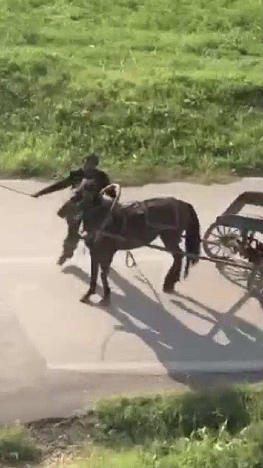 İnsafsız adam yükü çekmeyen atı böyle kırbaçladı! video izle - Sayfa 3