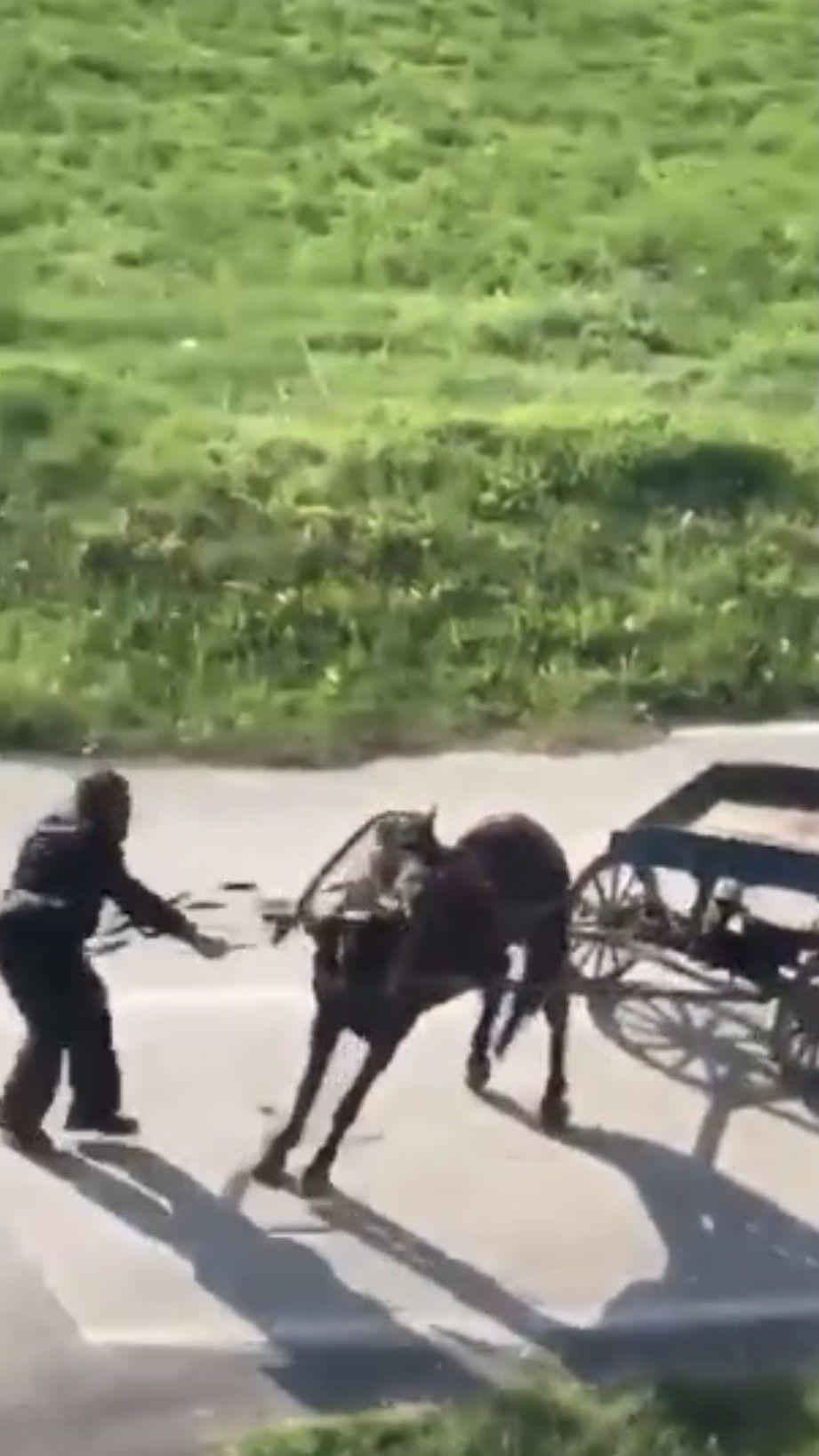 İnsafsız adam yükü çekmeyen atı böyle kırbaçladı! video izle - Sayfa 4