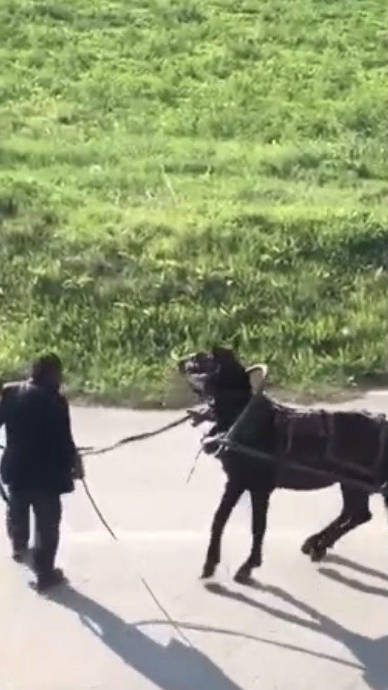 İnsafsız adam yükü çekmeyen atı böyle kırbaçladı! video izle - Sayfa 2