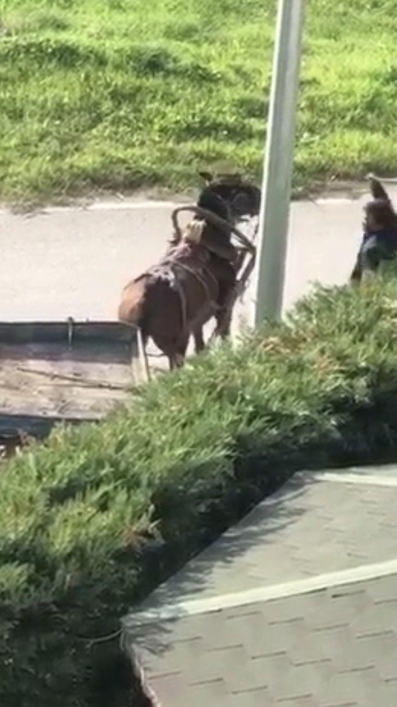 İnsafsız adam yükü çekmeyen atı böyle kırbaçladı! video izle - Sayfa 1