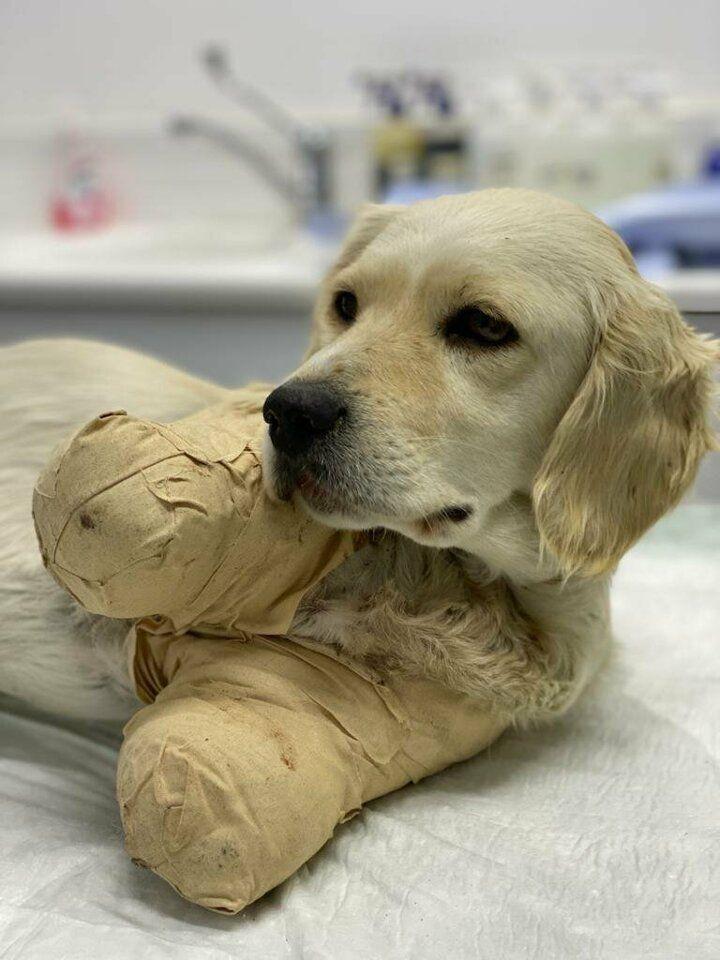 Patileri kesilen Pamuk adlı yavru köpekten güzel haber geldi - Sayfa 3