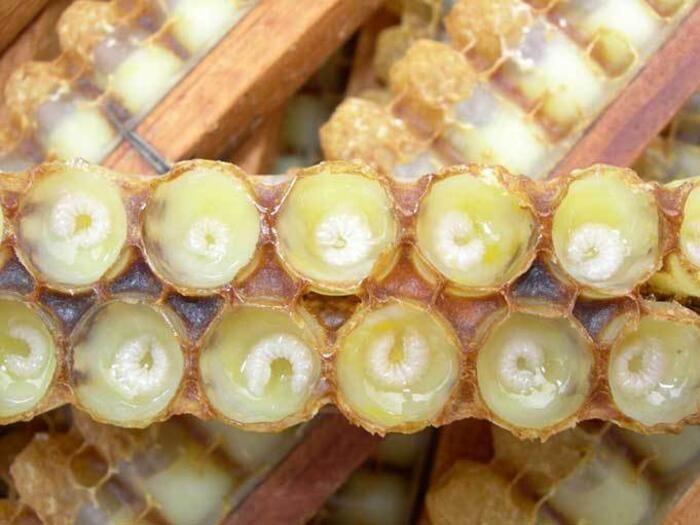 Arı sütünün faydaları nelerdir, ne işe yarar? - Sayfa 2