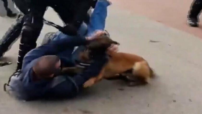 Hollanda'da polisler göstericilerin üzerine köpek saldı