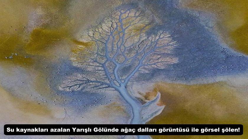 Su kaynakları azalan Yarışlı Gölünde ağaç dalları görüntüsü