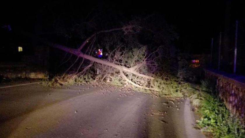 Bodrum ile Denizli'de şiddetli fırtına! Ağaçlar devrildi