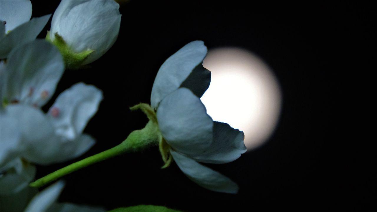 Van'da yılın ilk 'Süper Ay'ı gökyüzünde görsel şölen oluşturdu! - Sayfa 2
