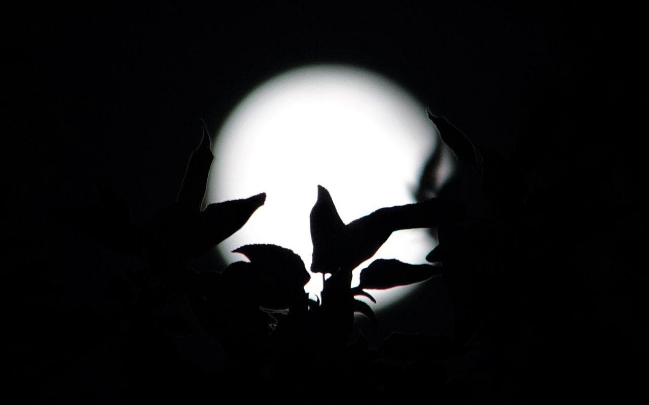 Van'da yılın ilk 'Süper Ay'ı gökyüzünde görsel şölen oluşturdu! - Sayfa 4
