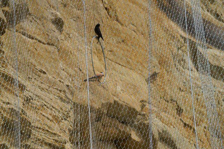 Silivride kuşları öldüren çelik ağ - Sayfa 1