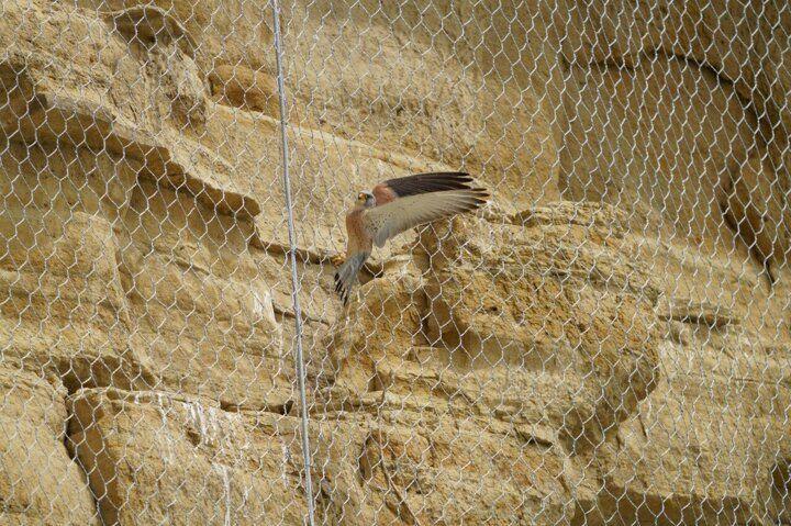 Silivride kuşları öldüren çelik ağ - Sayfa 3