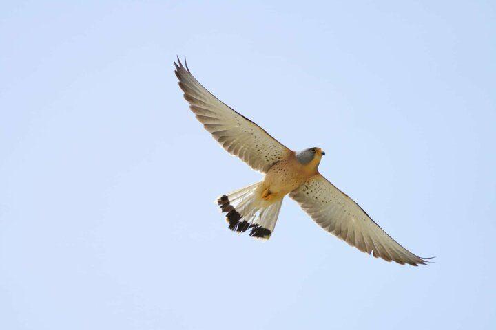 Silivride kuşları öldüren çelik ağ - Sayfa 2