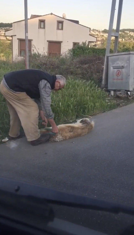 Vahşetin böylesi! Köpeğini boğazından iple bağlayarak çöpe attı - Sayfa 2