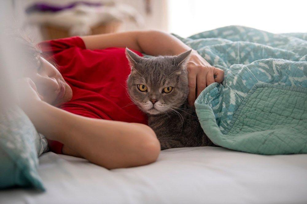 Bilim insanları beş tür kedi-insan ilişkisi tespit etti! - Sayfa 1