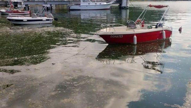 Marmara salyası Karadeniz içinde tehlike haline geldi! - Sayfa 1