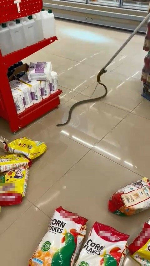 Kocaeli 'de alışveriş için gittikleri markette rafların arasından yılan çıktı! - Sayfa 4