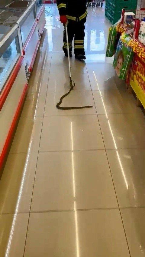 Kocaeli 'de alışveriş için gittikleri markette rafların arasından yılan çıktı! - Sayfa 2