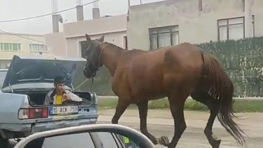 Atı aracın arkasına bağlayıp kilometrelerce koşturdular