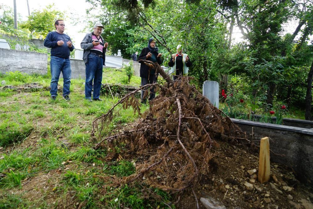 Ceset yiyen ayı, yeniden ortaya çıktı! Mezarı kazarken Saniye saniye böyle görüntülendi - Sayfa 4