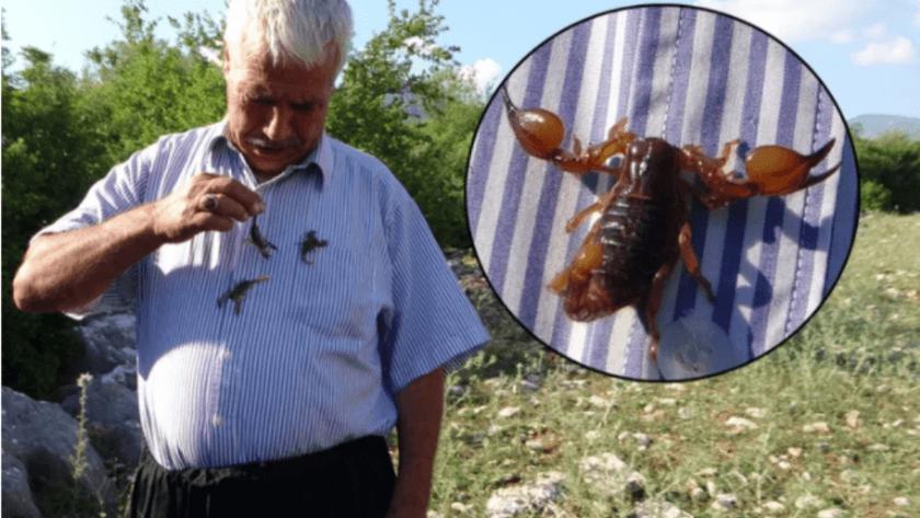 Adana'da 'Beni sokan akrep ve arılar öldü' deyip anlattı!