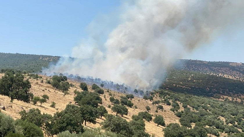 Manisa'da makilik alanda korkutan yangın