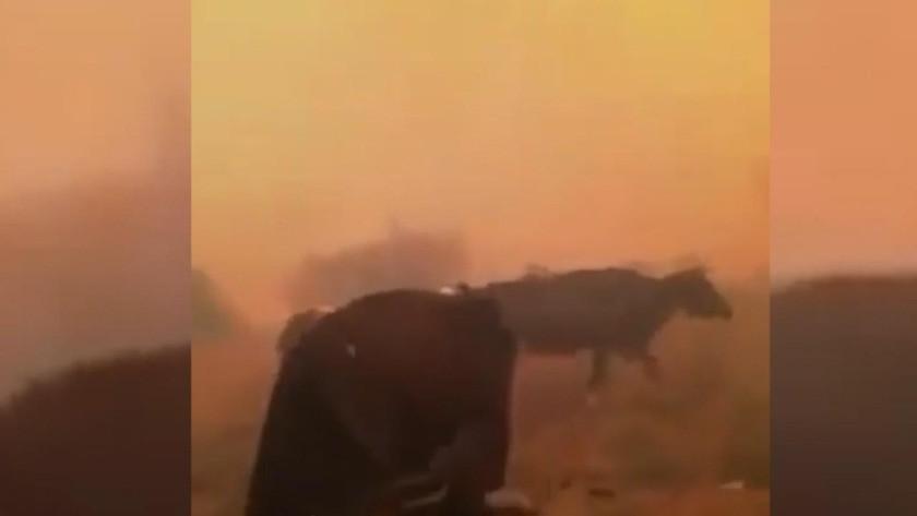Manavgatlı bir çiftçinin hayvanlarını kurtarma çabası yürekleri yaktı