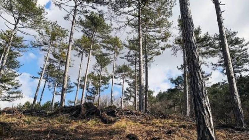 O ilde Ormanlık alanlara giriş ve çıkışlar yasaklandı!