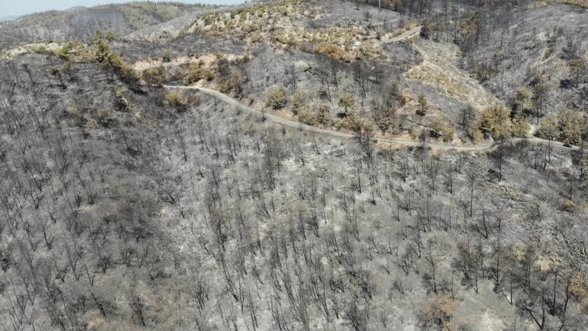 Yangın bölgelerindeki fırsatçılık 'yok artık' dedirtti