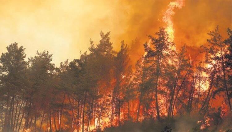 Oyuncu İbrahim Çelikkol Milas'taki orman yangınında alevlerin içine hortumla daldı - Sayfa 3