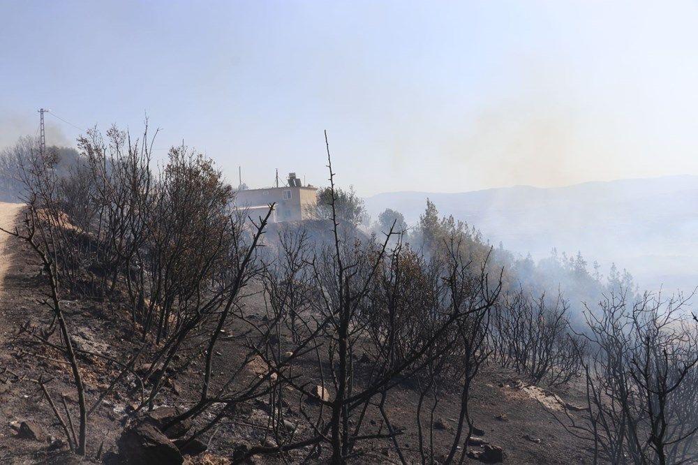 Yangından etkilenen bölgelere hangi ağaçlar dikilecek? - Sayfa 3