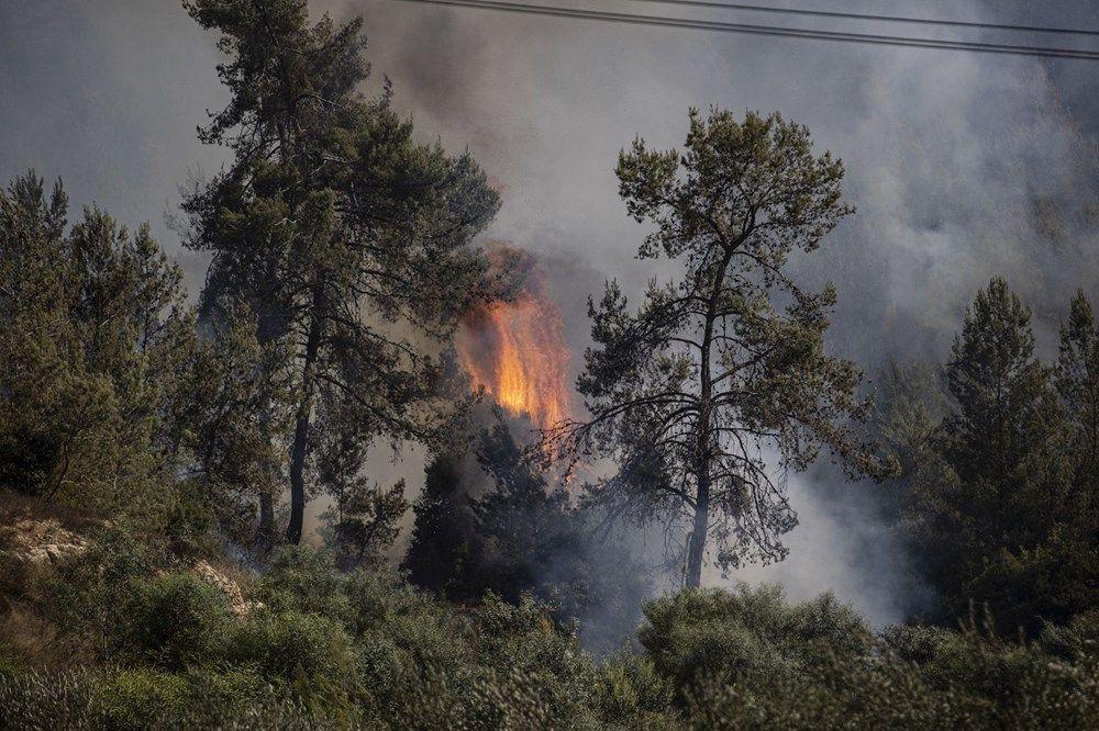 Yangından etkilenen bölgelere hangi ağaçlar dikilecek? - Sayfa 2