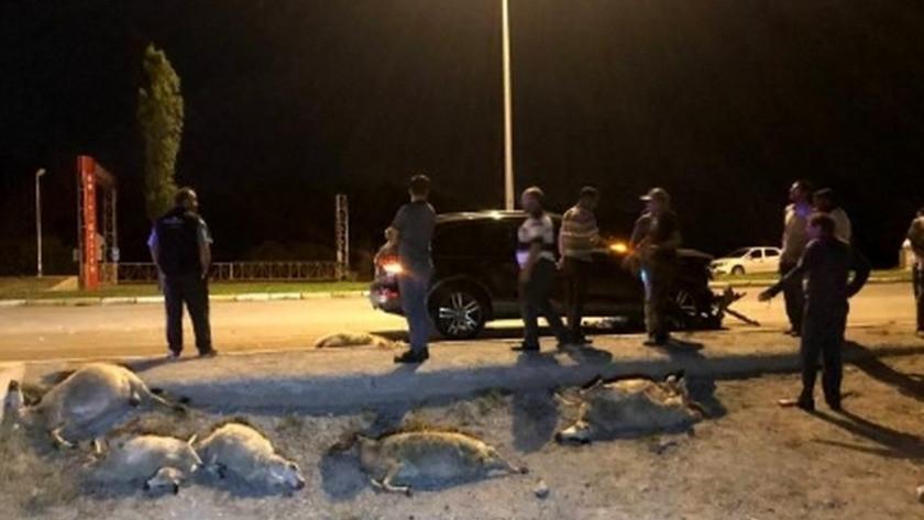 Erzincan'da yola çıkan sürüye otomobil daldı: 25 koyun telef oldu