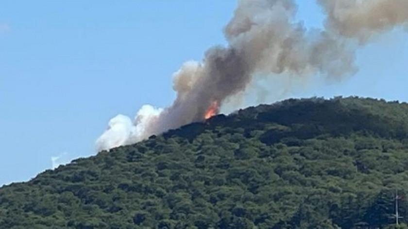 İstanbul Heybeliada'da orman yangını!