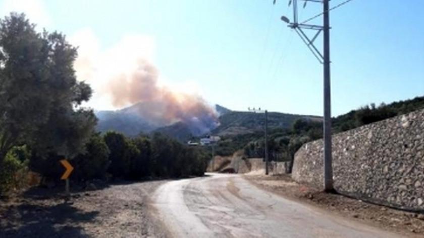 Bursa'nın Mudanya ilçesinde orman yangını!