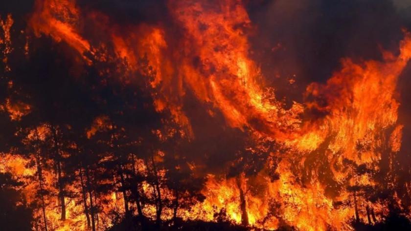 Manavgat ve Akseki'deki orman yangınıyla ilgili korkunç detay!