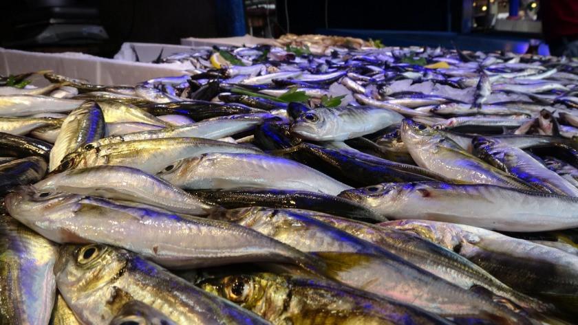 Karadeniz'de balık fiyatları şaşırttı!